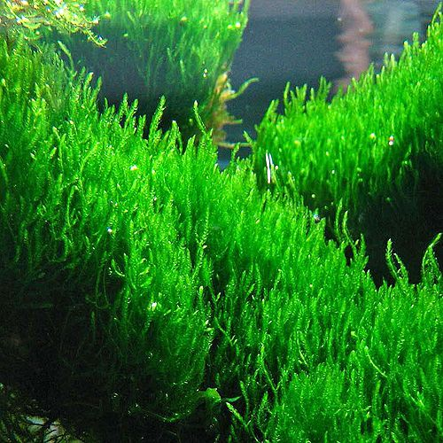 325 best images about aquariums plants on pinterest for Growing plants with fish