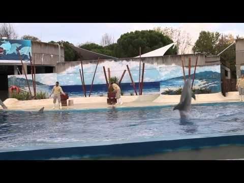 Pokazy delfinów w ZOO w Madrycie