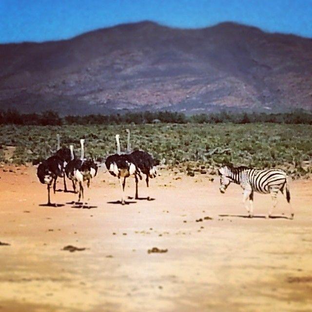 Safari in Cape Town at Inverdoorn Game Reserve