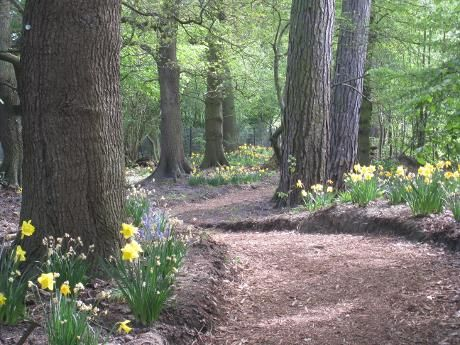Biddulph Grange Garden, Staffs, Woodland Walk 03
