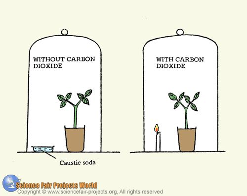 Jan Ingenhousz Photosynthesis Experiment >> Carbon dioxide and photosynthesis | teaching science | scientific met…