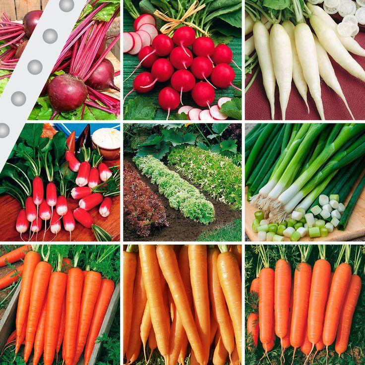 Gemüse-Saatband-Sortiment - klappt immer