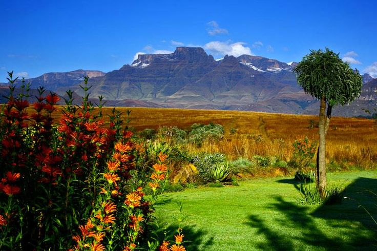 Natural South Africa