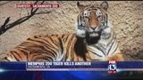 A tiger from the Memphis Zoo killed another tiger at the Sacramento Zoo Wednesday.
