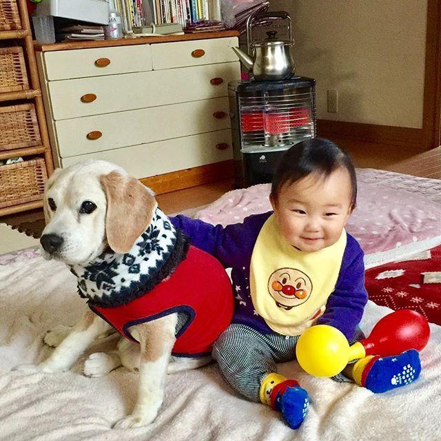 昨日は数ある写真の中から @beaglemasters 様にイチローの写真が選ばれて紹介して頂きました❣🐶👍💖 I can never ever thank you enough✨🙇🏻 甥っ子くんから照れながらの祝福です㊗️🎉 (以前の写真ですが…😅) 甥っ子くんは「イチロー、おめでとう🎈」と優しく手を添えてくれてます🐶💓👶 #ふわもこ部 #犬バカ部 #いぬら部 #犬好き #犬 #いぬ #わんこ #ビーグル #アメリカンビーグル #愛犬 #犬のいる暮らし #コドモノ #赤ちゃん #赤ちゃんと犬 #kids_japan #todayswanko #cute #pecoいぬ部 #dog #inu #instadog #beagle #beagleloveit #beagleworld #senior #dogstagram #west_dog_japan #beagleoftheday #followme