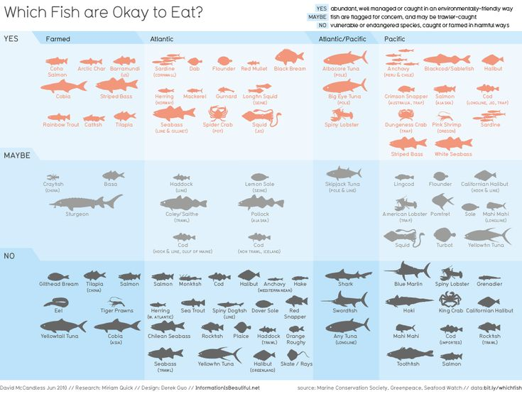 14 best endangered species images on pinterest for Kinds of fish to eat