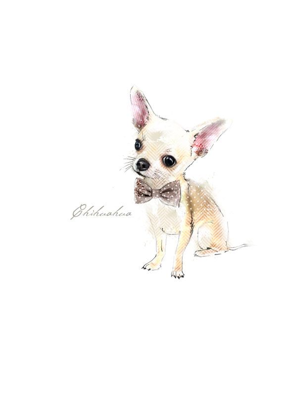 Chihuahua A3 Giclee archival print on Etsy, $42.51