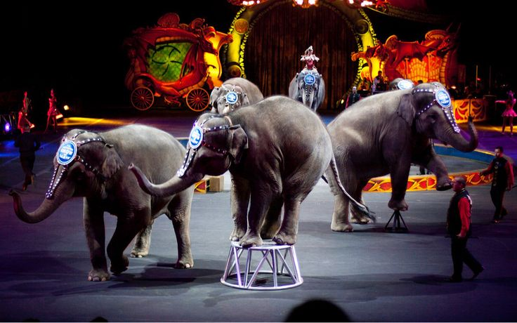 Chris Christie Vetoed Bill That Would Ban Wild Animal Circus Acts in New Jersey — Let's Get Governor Murphy to Change This! On his last day in office, former governor Chris Christie decided to pocket veto the bill, by not signing it into law, stopping it from going into effect.