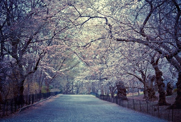 20 Absolutely Breathtaking Photos of Central Park - My Modern Metropolis