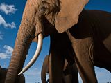 Photo of an elephant in Samburu