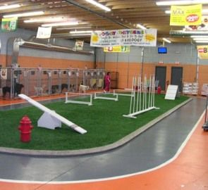 """""""Race"""" track around play area. Have the agility equipment already, just need the flooring - instead of hard, dry weeds. Love the race track idea for my kids to go on with bikes, scooters, and other toys. #PinMyDreamBackyard"""