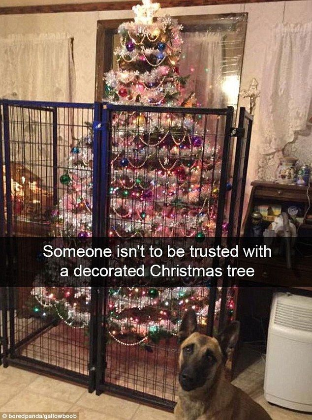 This dog must have ended up on the naughty list after trashing the tree last year - as thi...