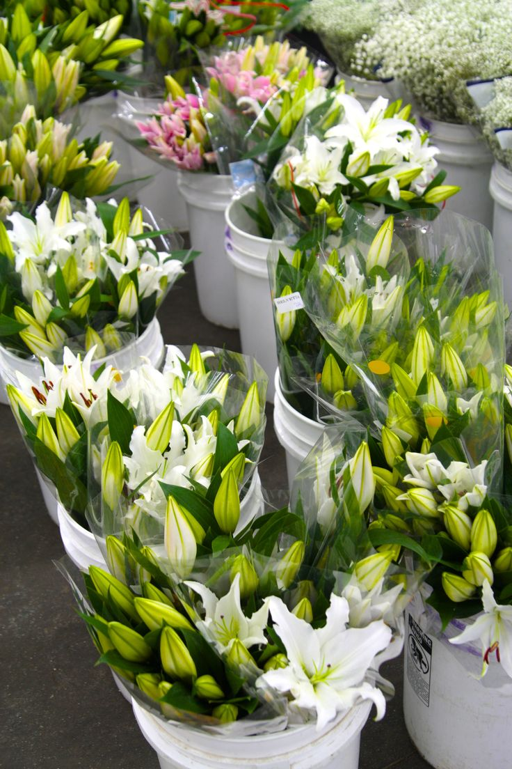 7 Best Lily Flowers Images On Pinterest Flower Market Lilies
