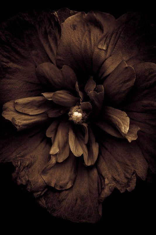 Красивые коричневые картинки 4мп