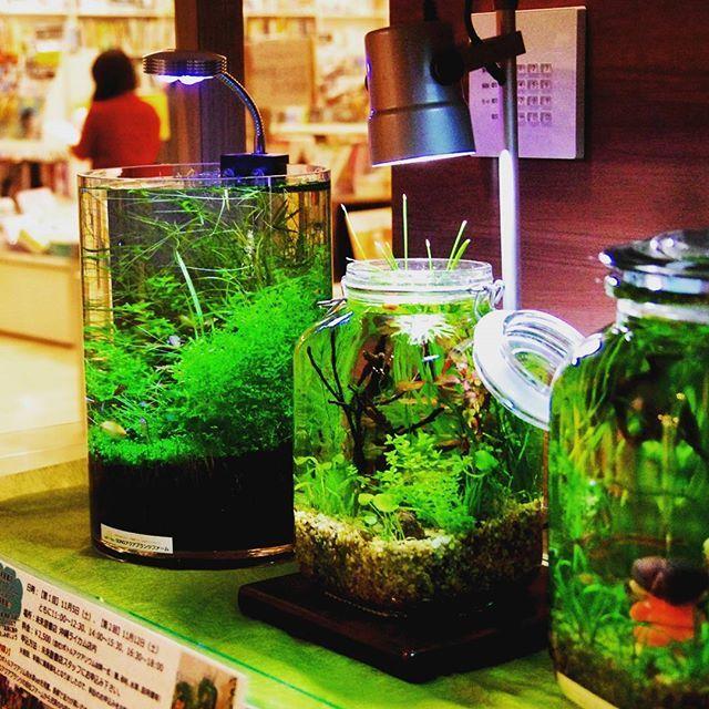 Planted jar tanks