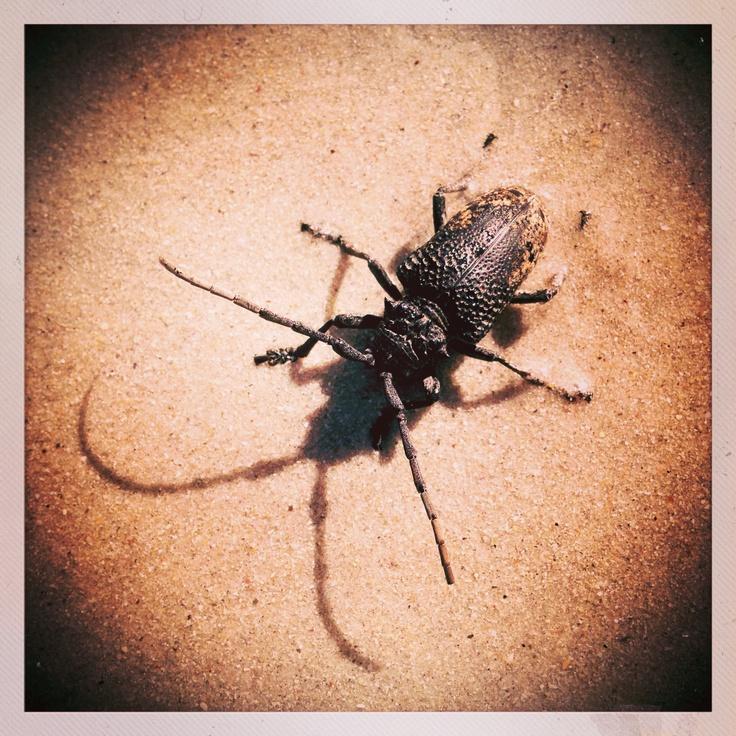 Beautiful Beach Bug