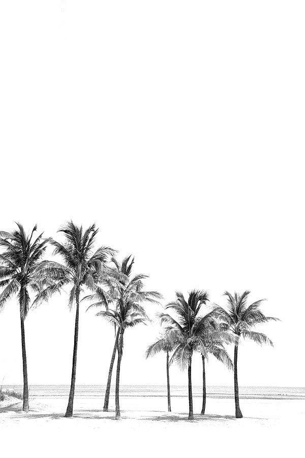 Dopediamond Tumblr Com Black And White Photo Wall Black And White Picture Wall Palm Trees Wallpaper