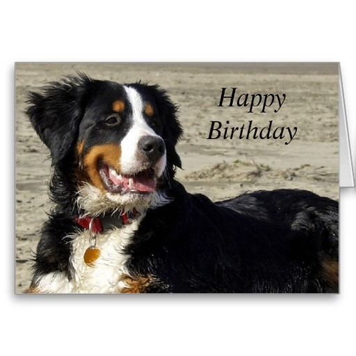 Happy Birthday Cards For Dog Lovers Best Wishes Images Birthdays