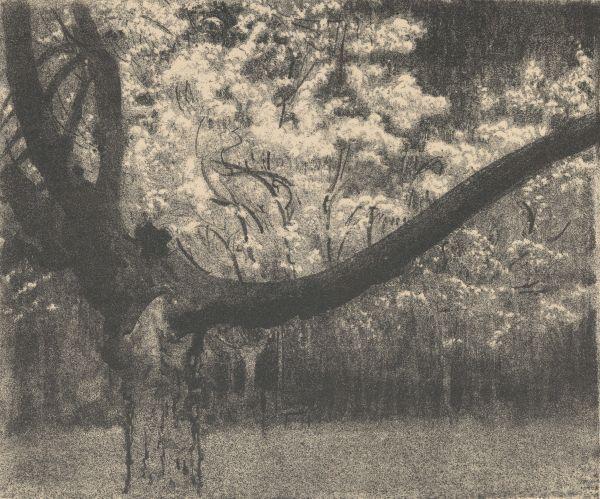 Suchar na tle kwitnących drzew - Leon Wyczółkowski