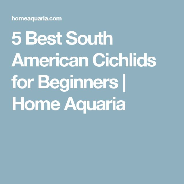 5 Best South American Cichlids for Beginners | Home Aquaria