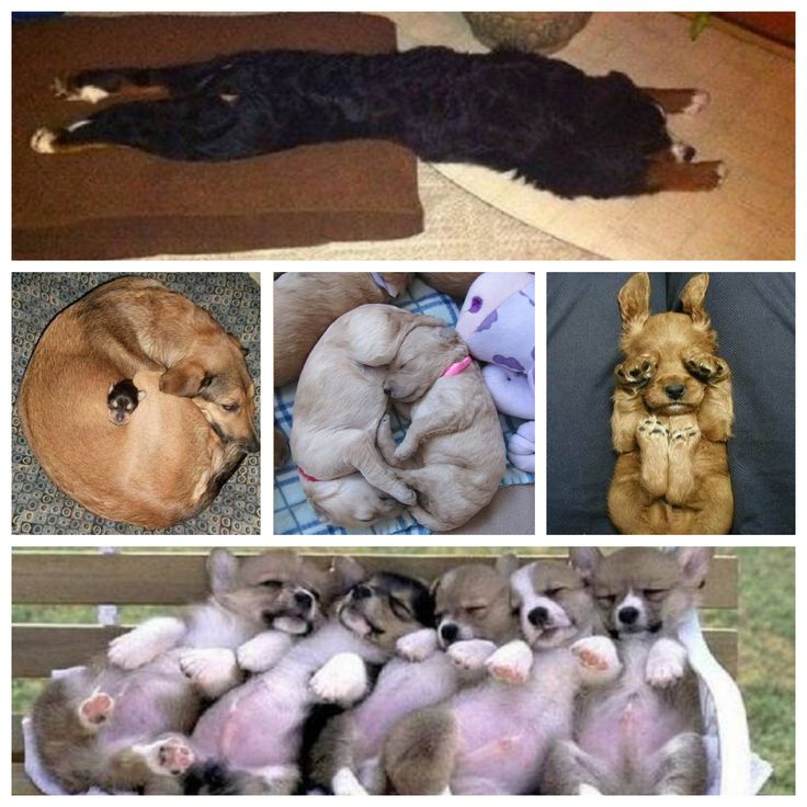 10 faits hilarants de chiens qui se sont endormis - http://www.01news.fr/10-faits-hilarants-de-chiens-qui-se-sont-endormis/ #AmisChien, #Chien