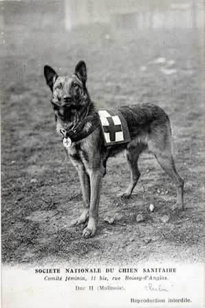 """En La Primera Guerra Mundial a los perros de La Cruz Roja se les llamaba """"Ambulancia"""". Eran entrenados para encontrar víctimas vivas en el campo de batalla y todo lo que le ordenara su acompañante humano, como llevar ayuda a los heridos. Esta foto está hecha en 1915."""