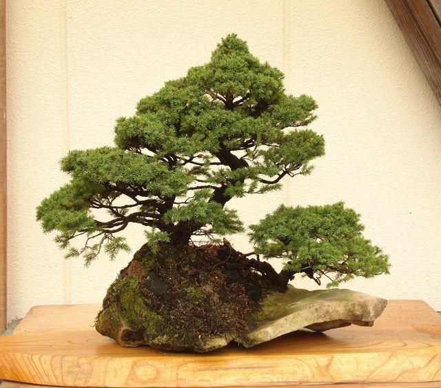 石付盆栽-09a.jpg