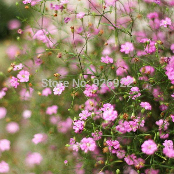 Ingemaakte bloemzaden baby adem, Roze met gypsophila zaden, Roze met baby'breath, ongeveer 50 deeltjes(China (Mainland))