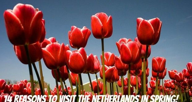 14 Reasons to visit the Netherlands in Spring! - Netherlands Tourism
