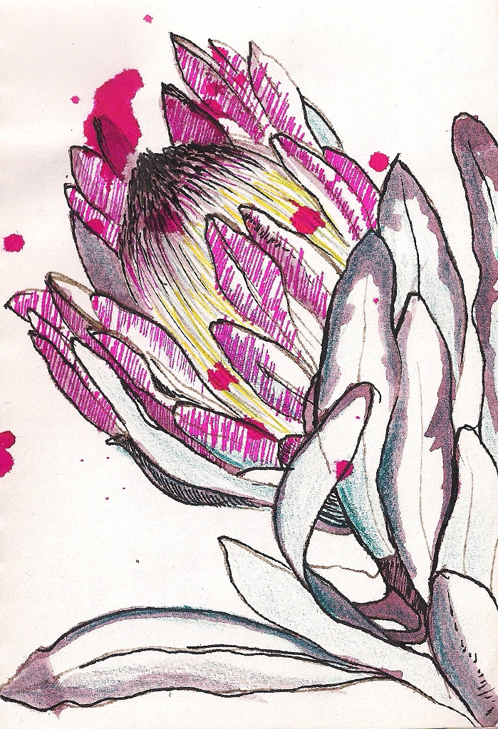 Ink and paper - Protea - South Africa's precious flower