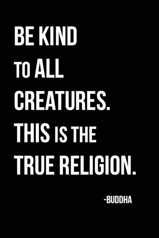 38 Awesome Buddha Quotes On Meditation Spirituality And Happiness 21