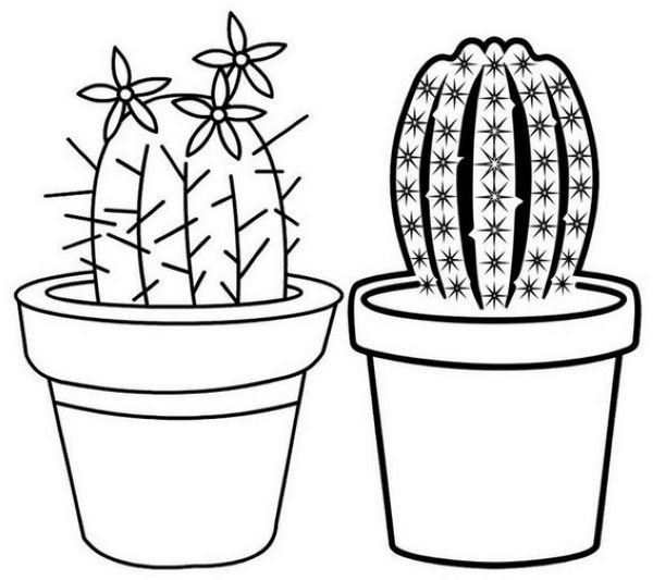 Beautiful Cactus On The Pot Coloring Page