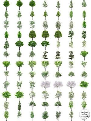 PNG transparent trees (hight quality)