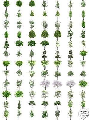 Árboles en PNG de alta resolución (PNG Transparent Trees)   Recursos 2D.com