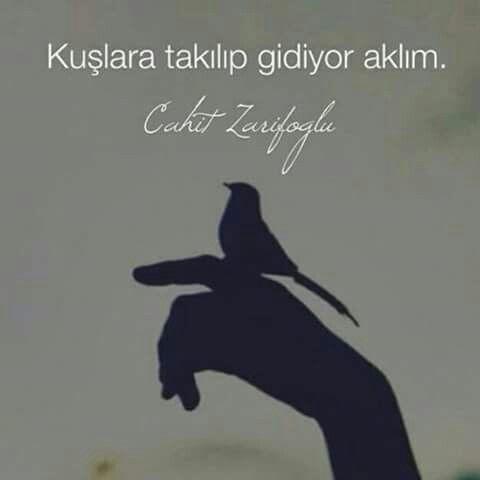 Kuşlara takılıp gidiyor aklım. - Cahit Zarifoğlu #sözler #anlamlısözler #güzelsözler #manalısözler #özlüsözler #alıntı #alıntılar #alıntıdır #alıntısözler