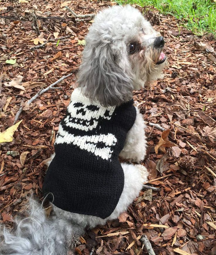 Chilly Dog Black Skull Small Dog Sweater