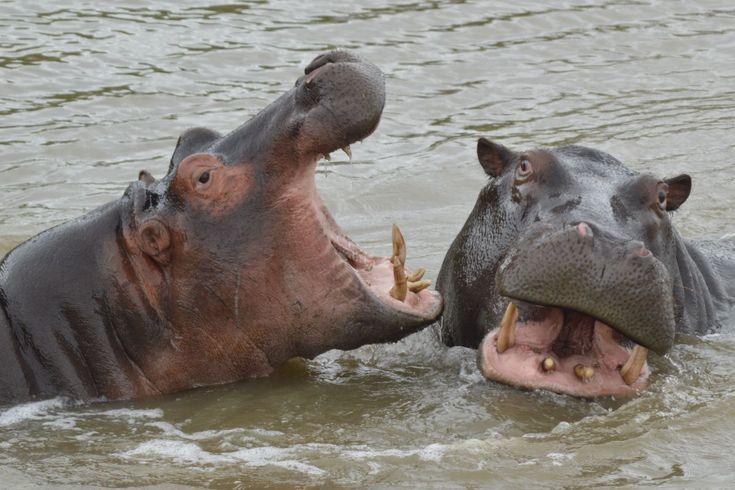 Het iSimangaliso Wetland Park, voormalig het Greater St. Lucia Wetland Park genaamd, is in 1895 opgericht als wildreservaat. Inmiddels is het park uitgeroepen tot Unesco werelderfgoed vanwege het bijzondere ecosysteem. De naam iSimangaliso is afkomstig uit de Zoeloe-taal en betekent 'een wonder'.