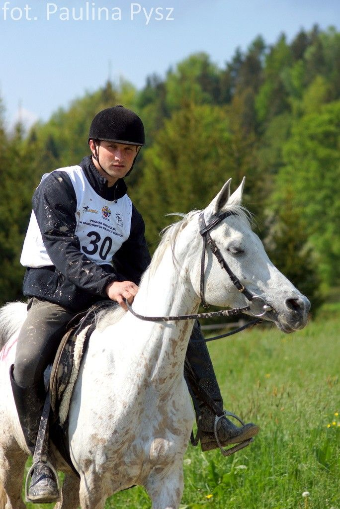 fot. P.Pysz Portal Koń Polski | Hortpress