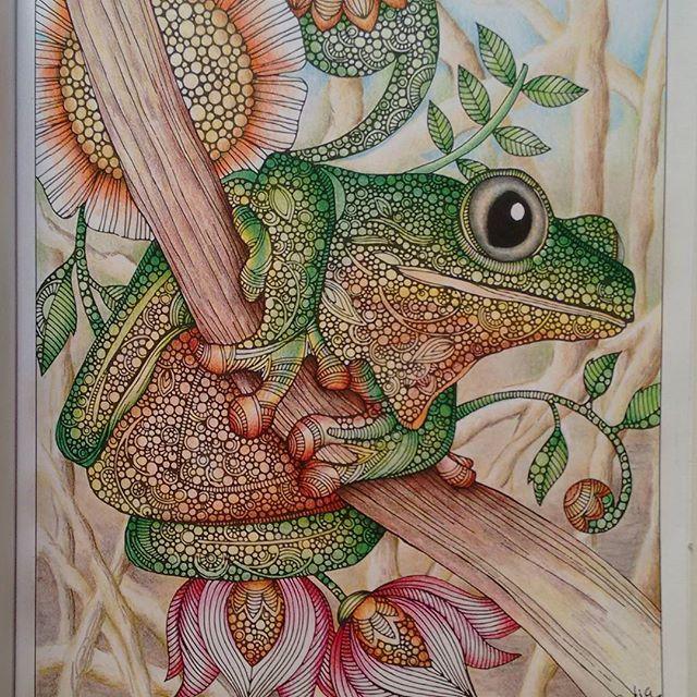 Sapo Creativecoloringanimals By Valentina Harper Usei Maped