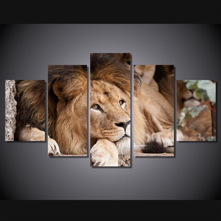 Framed Lion Wild Animal Zoo Relax Wall Art Children Home Room Decor Photo Poster
