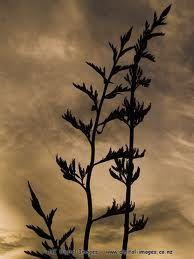 new zealand flower silhouette - flax