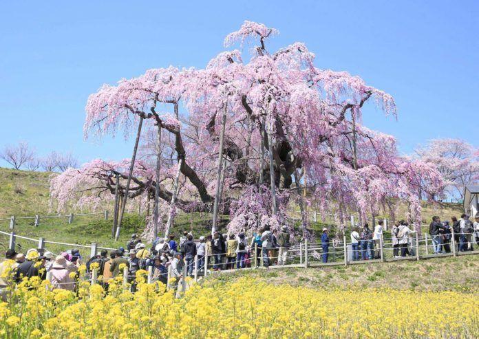 Epingle Sur Japanese Photography