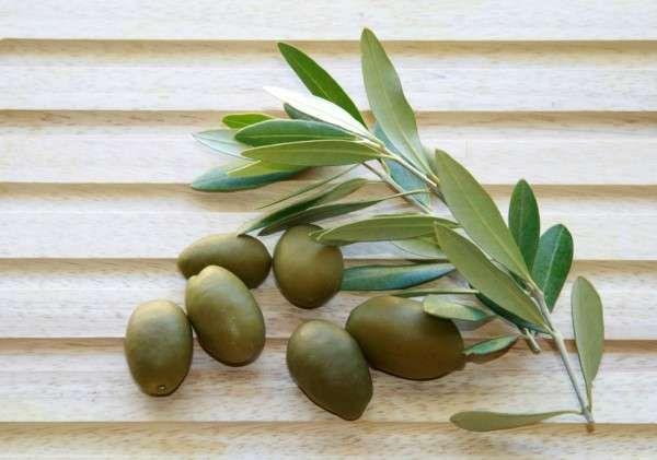 Oliveleaf3