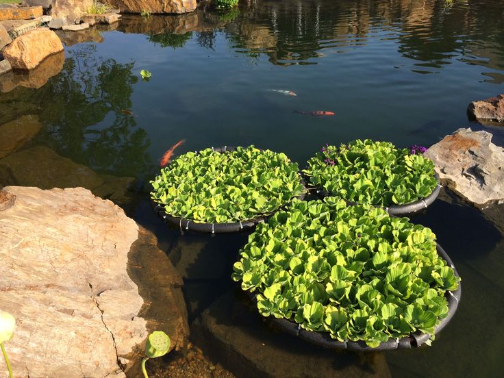 25 best ideas about plastic fencing on pinterest for Koi pond protection