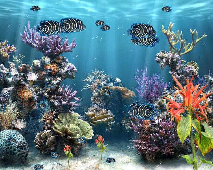 25 Best Ideas About Fondos De Pantalla Movimiento On: 25+ Best Ideas About Aquarium Screensaver On Pinterest