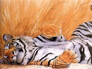 tiger....amazing: Big Cat, Animal Drawings, Glitter Graphics, Wallpapers Backgrounds, Lazy Sunday, Tigers Art, Naps Time, Desktop Wallpapers, Planets Earth