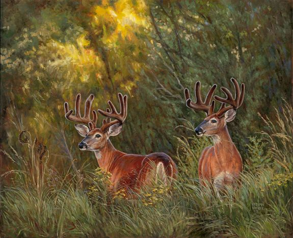 Ryan Kirby Wildlife Art Ryan Kirby Wildlife Art