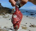 Woman finds disturbing looking creature on Cape beach