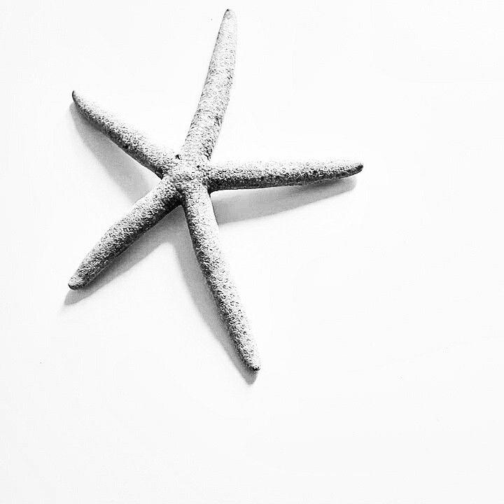 Starfish fot.M.Górska