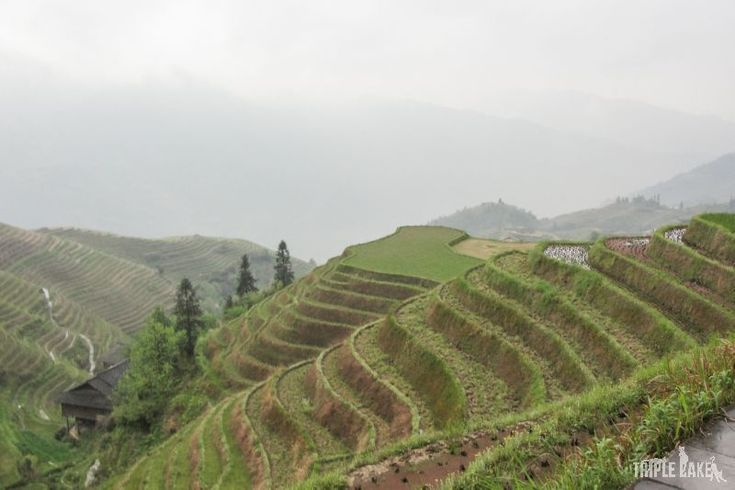 Dragon Backbone's Rice Terraces   #China #Guilin #nature